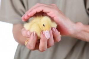 soins pour animaux